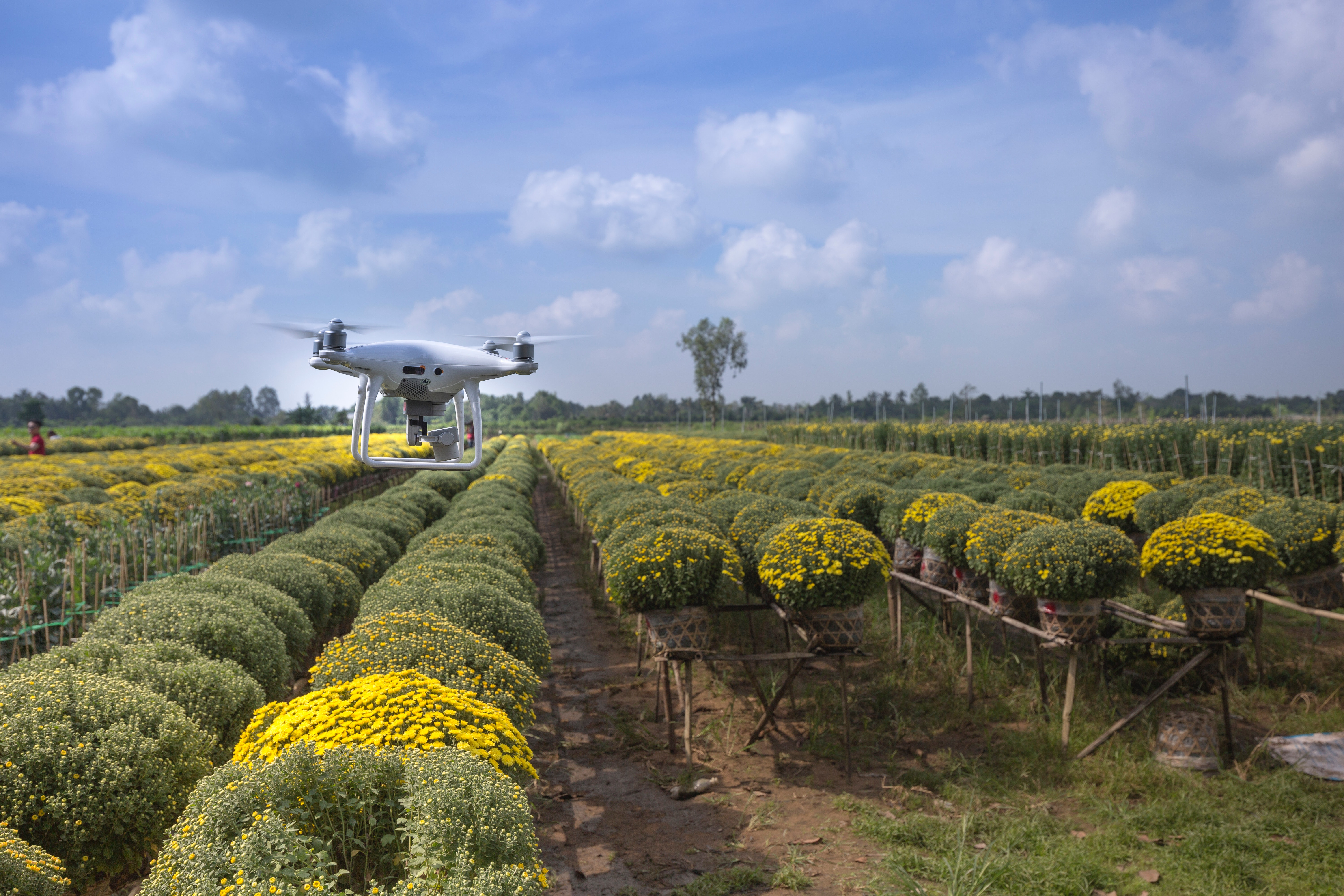 Drone over orchard